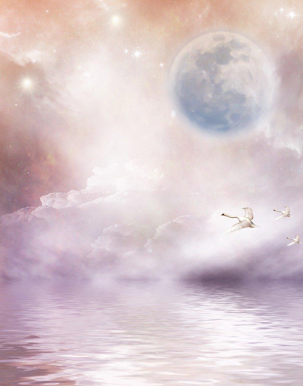 Cygnes et lune